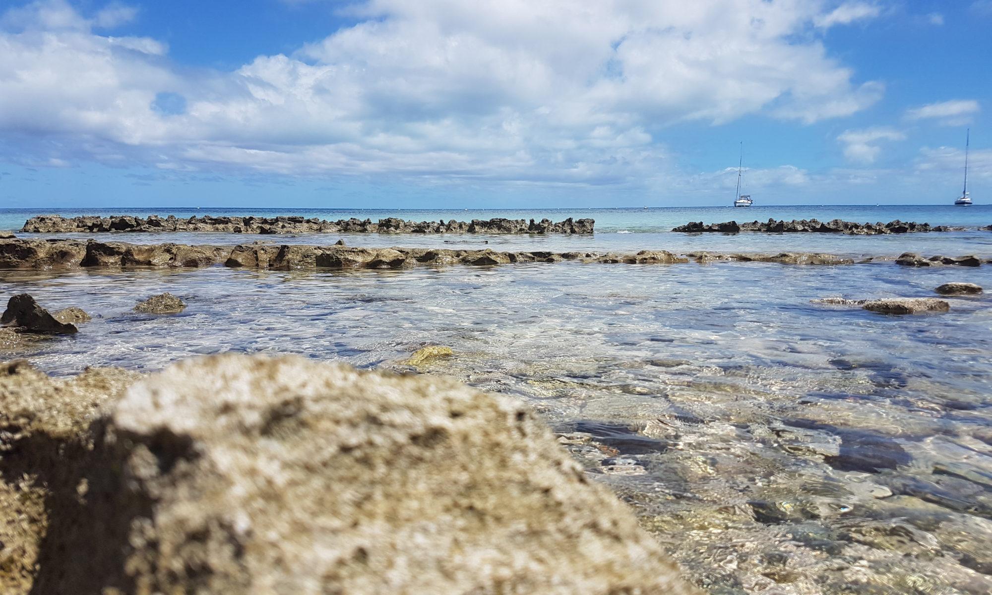 A l'îlot Signal (photo: Gecka)